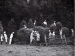 Pupils stacking hay Uploaded by: schoolhistory3